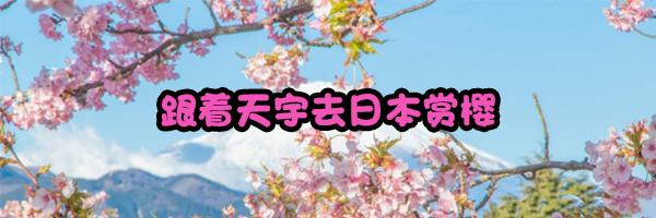 赏樱.jpg