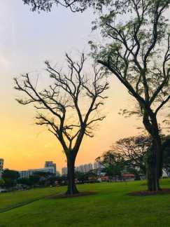 古藤老树昏鸦,夕阳西下,断肠人在天涯