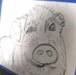 画了一头猪。宠物猪。
